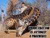 giraffe_jim-6